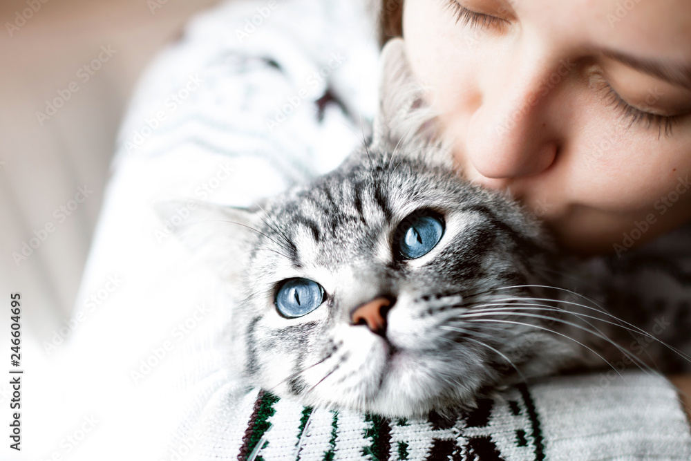 Fototapety, obrazy: Young beautiful woman at home kissing and hug her lovely fluffy cat. Gray tabby cute kitten with blue eyes. Pets, friendship, trust, love, lifestyle concept. Friend of human. Animal lover. Close up.