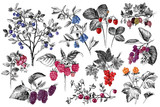 Set of hand drawn berries branches - 246611070