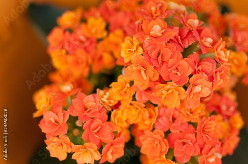 Foto op Canvas Cappuccino Orange garden flowers