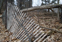 Forest Fence Leaning And Falling