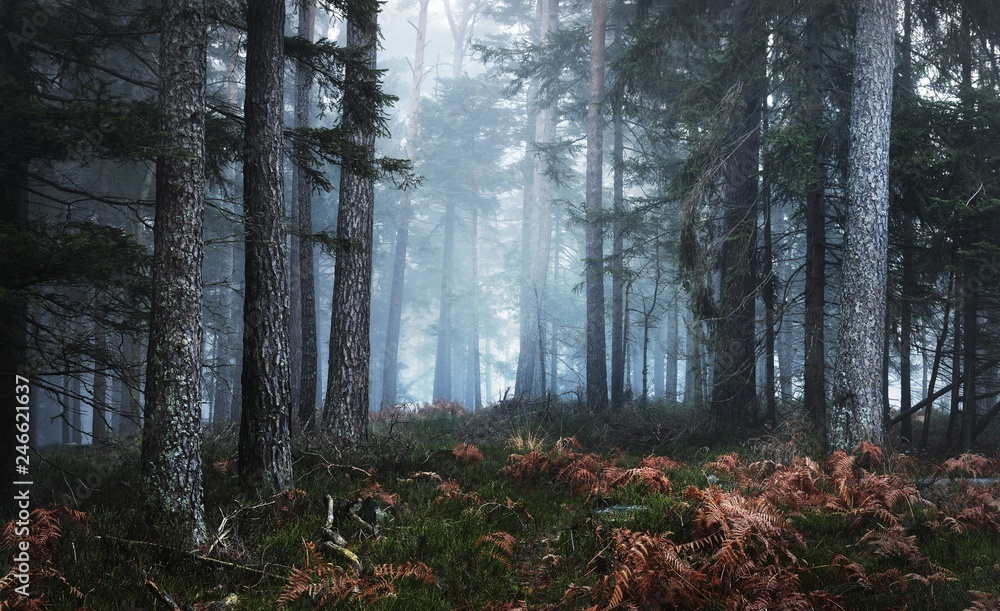 Fototapety, obrazy: Dark mysterious pine forest in mist with a carpet of moss and fern. French Alsace, Vosges mountains