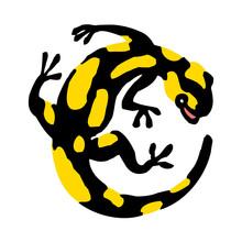 Salamander, Lizard With Black ...
