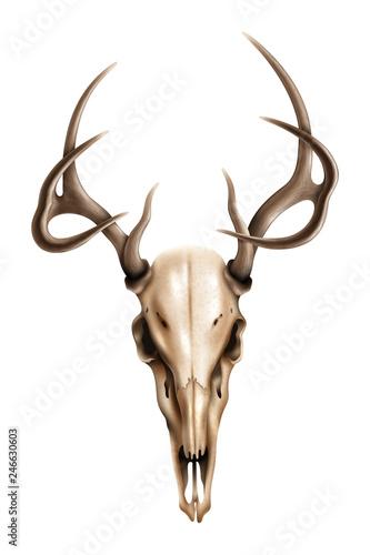 Keuken foto achterwand Waterverf Illustraties Realistic textured deer skull with horns vector illustration