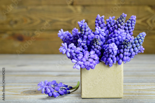 Happy Mothers Day card. Muscari flowers arranged in gift box