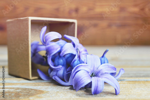 Mothers Day flowers. Hyacinth flowers in gift box