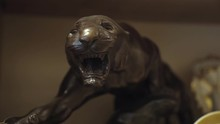 Antique Shop Black Panther Sta...