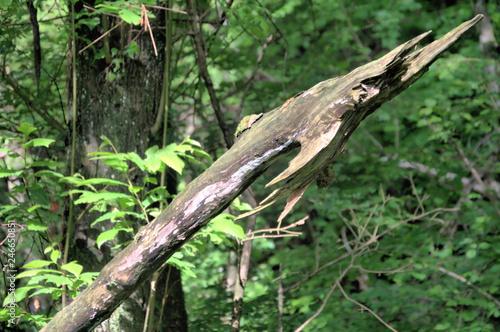 Cadres-photo bureau Bonsai Spear in the woood