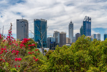 Skyline Of Perth Seen From Kingspark With Juicy Vegetation In Foreground