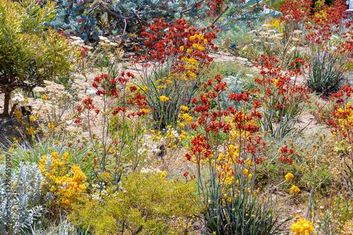 Αφίσα  Colorful blooming flowers in Perth botanical garden with its collection of Weste