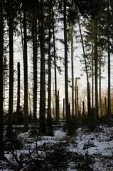 Sturmschäden im Wald