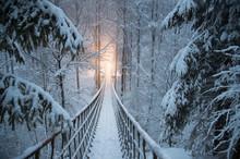 Im Verschneiten Winterwald Hä...
