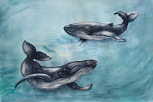 Watercolor With A Pair Of Large Gray Whales In Blue Water. Illustration With Animals Made By Hand.