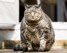 A Very Fat Cat In A Garden