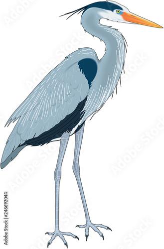 Great Blue Heron Vector Illustration Wall mural