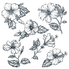 Tropical Flowers Set, Vector Sketch Illustration. Hand Drawn Tropic Nature And Floral Design Elements.