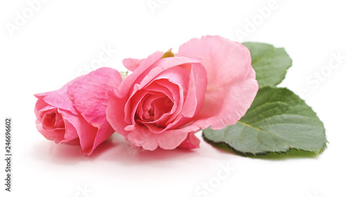 Two pink roses.