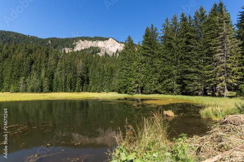 Summer landscape of  The Grassy (Trevistoto) Smolyan lake at Rhodope Mountains, Smolyan Region, Bulgaria #246711264