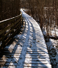A Wooden Walkway In Frick Park...