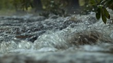 Stream Rushing Over Rocks In Forest CLOSE UP
