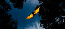 Flying Fox Bat During The Day ...