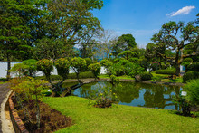 Japan Or Japanese Garden Style With Bonsai Tree With Green Grass And Small Pool Or Lake With White Wall On Background - Photo