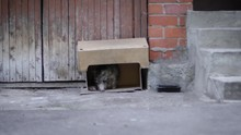 Street Cat In The Box On Neigh...