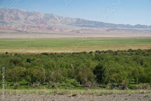 Deurstickers Asia land Floodplain birch forest in Khovd aimak in Mongolia