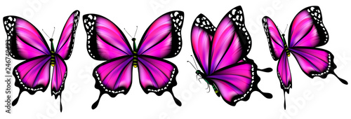 Fotografía  beautiful pink butterflies, isolated  on a white