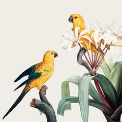 Fototapeta Vintage Macaw tropical illustration