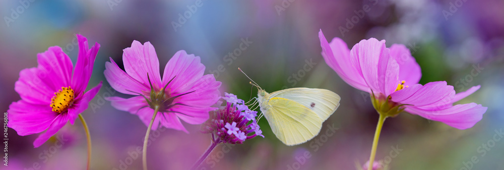 the garden flower and the butterfly - macro photo