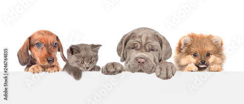 Obraz Group of dogs and cats above empty white banner. isolated on white background. Empty space for text - fototapety do salonu