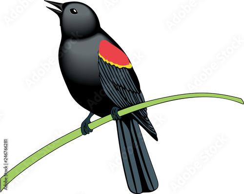 Red Winged Blackbird Vector Illustration Wallpaper Mural