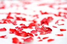 Red Roses On A White Bed In We...
