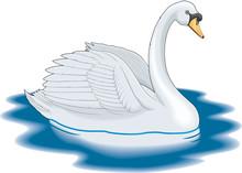 Mute Swan Swimming Vector Illu...