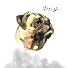 Watercolor Dog Pug Portrait - ...