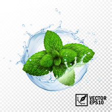 3d Realistic Isolated Vector Sprout Of Fresh Mint Leaves In A Splash Of Water With Drops