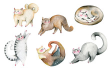 Cute Cats Set. Isolated On Whi...