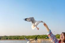 Girl Feeding Food A Seagull In...
