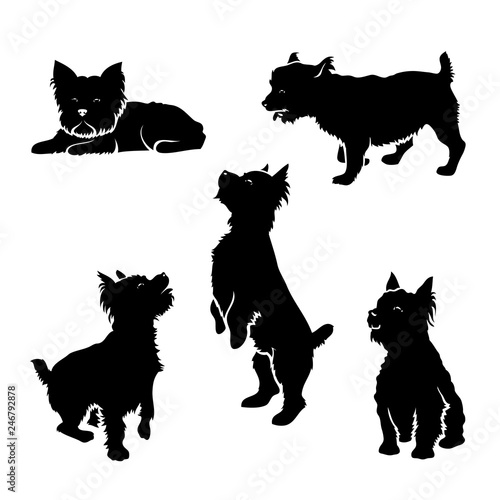 Foto  Set of Yorkshire terrier silhouettes - isolated