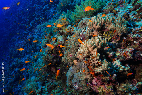 Staande foto Finger Leather Corals at the Red Sea, Egypt