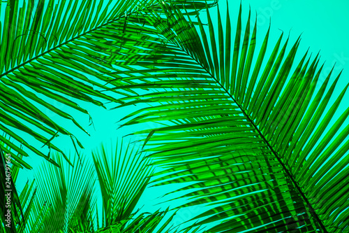 Ingelijste posters Tropische Bladeren Texture of Green Leaf of Palm Tree for Natural Abstract Background.