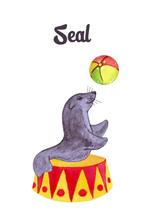 Watercolor Seal With Ball Circ...