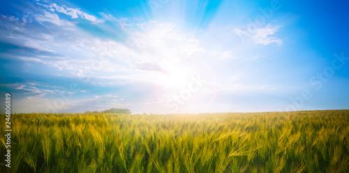 Fotobehang Zwavel geel Green meadow under blue sky with clouds