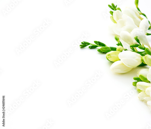 Wall Murals Spring background. Beautiful white spring freesia flowers on a white background. Place for text, close-up. Romantic background for spring holidays.