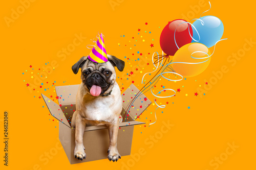 congratulation. Greeting card Happy Birthday. Dog pug. Box, balloons and tinsel.