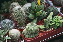 Cactus De Différentes Formes