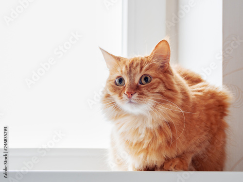 Foto op Aluminium Kat Cute ginger cat siting on window sill and waiting for something. Fluffy pet looks curious.