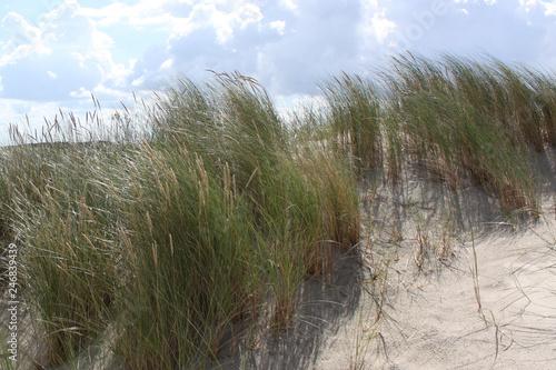 Fototapeten Nordsee Wind chime of vegetation on sand dune on Isle of Spiekeroog under blue cloudy sky