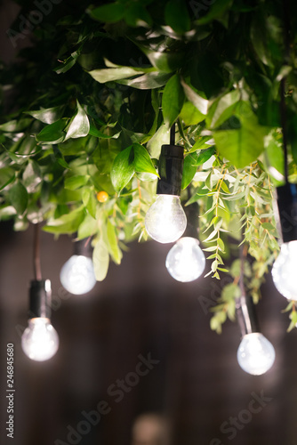 Photo  light bulbs at the night, electric garland hanging on the tree