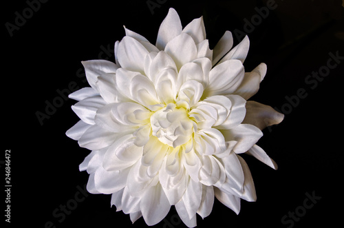 Poster de jardin Dahlia Ornament flower